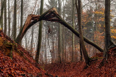 Amazing Fall Forrest. Lovely Nature Picture of an European Forest in Autumn Bavaria, Germany. Spooky and Creepy Atmosphere stock images