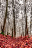 Amazing Fall Forrest. Lovely Nature Picture of an European Forest in Autumn Bavaria, Germany. Spooky and Creepy Atmosphere Stock Photo