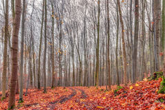 Amazing Fall Forrest. Lovely Nature Picture of an European Forest in Autumn Bavaria, Germany. Spooky and Creepy Atmosphere Royalty Free Stock Photo
