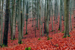 Amazing Fall Forrest. Stock Photography
