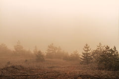 Amazing Fall Forrest. Royalty Free Stock Photography