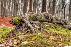 Amazing Fall Forrest Royalty Free Stock Images