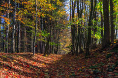 Amazing Fall Forrest. Lovely Nature Picture of an European Forest in Bavaria, Germany stock images