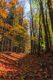 Amazing Fall Forrest. Lovely Nature Picture of an European Forest in Bavaria, Germany Stock Photo