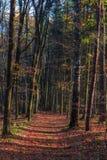 Amazing Fall Forrest. Stock Image