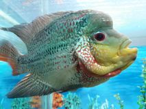 Amazing Fish stock photography