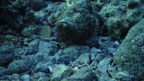 Amazing Fish swim in the Red Sea stock video footage