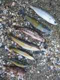 Summer colorful small fishes on beach sand macro shoot close up stock image