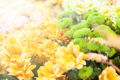 Amazing floral background with sun rays Royalty Free Stock Images