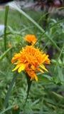 Beautiful flower stock photos