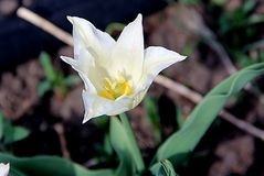 An amazing flower with gentle white and yellow core stock image