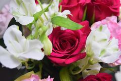 Amazing  flowers rose  red  bouquet. Roses mini bouquet Stock Photography