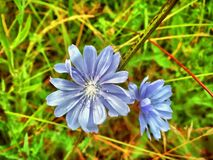 Amazing flowers. Amazing Summer flowers Royalty Free Stock Photography