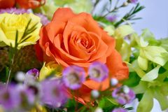 Amazing flowers summer colors orange roses and yellow. Summer flowers bouquet rose orange happiness royalty free stock photos