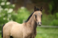 Amazing foal on pasturage Royalty Free Stock Images