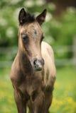 Amazing foal on pasturage Stock Image