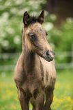 Amazing foal on pasturage Royalty Free Stock Photography