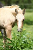 Amazing foal on pasturage Royalty Free Stock Image