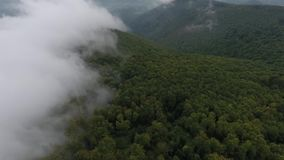 Amazing fog on the forest stock video