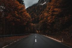 Road through austrian autumn foggy forest. Amazing foggy road somewhere in the woods of austria. Calming, fallen leaves in autumn with a beautiful highway Royalty Free Stock Images
