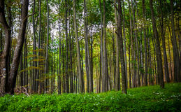 Amazing forest. In Bükk National Park, Hungary Royalty Free Stock Images