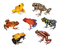 Amazing frogs. It is illustration of several amazing frogs Stock Photos