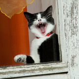 Amazing funny cat. At window Stock Photos