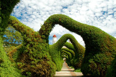 Trimmed hedges. Hedges and bushes trimmed to form arches over a path in a garden stock images