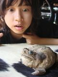 Amazing girl and smiling giant frog Royalty Free Stock Images