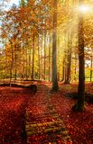 Amazing golden autumn colors in the forest path track. Autumn Collection.  Stock Image