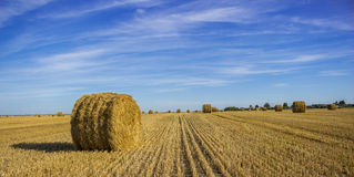 Amazing Golden Hay Bales,Wheat field. Hay bales on rural landscape,Minsk,Belarus royalty free stock image