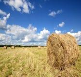 Amazing golden hay bales Stock Photo