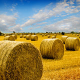 Amazing Golden Hay Bales Stock Images