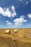 Amazing Golden Hay Bales Stock Photo