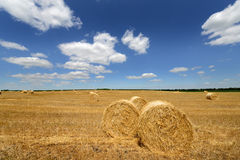 Amazing Golden Hay Bales Royalty Free Stock Images