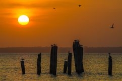 Amazing golden sunset over ocean with wooden poles and flying birds on Bubaque, Bijagos archipelago, Guinea Bissau Stock Photos