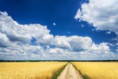 Amazing Golden Wheat Field. Royalty Free Stock Photos