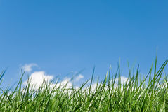 Amazing grass. Grassy skyline with white cloud coming out from the blades royalty free stock photo