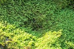 Amazing green moss carpet on the rock stock photos