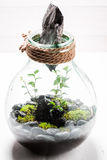 Amazing green plants in a jar with self ecosystem. On white table Stock Images