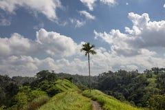 Amazing green rice field. Ubud, Bali, Indonesia. Jatiluwih near Ubud, Indonesia stock images