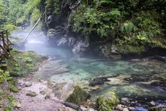 Bled Vintgar. Amazing green river in the Vintgar Gorge,Bled,Slovenia Royalty Free Stock Photos