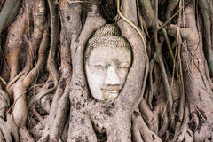 Amazing Head of Sandstone Buddha Stock Photography