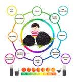 Amazing Health Benefits of Blackberries. Amazing Health Benefits of fruits Stock Photos