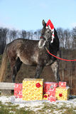 Amazing horse with christmas hat and gifts Royalty Free Stock Photography