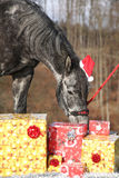 Amazing horse with christmas hat and gifts Royalty Free Stock Image
