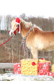 Amazing horse with christmas hat and gifts Stock Image