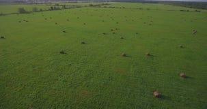 Huge field with hay bales, aerial pan stock video