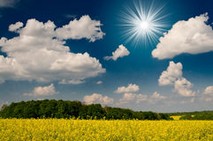 Amazing image sun,field and blue sky. Royalty Free Stock Images