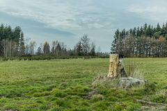 Amazing image of a tree stump in a grassland stock images